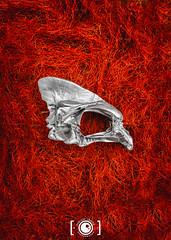 Skull (Dervish Images) Tags: skull pohutukawatree flowers thelightbulbprojectred dervishimages russdixon newzealand newplymouth taranaki thelightbulbproject fujixe2