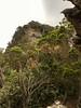 One final effort ([S u m m i t] s c a p e) Tags: bluemountains bushwalking copelandpass empresscreek jamisoncreek sublimepoint wentworthfalls spring leura newsouthwales australia