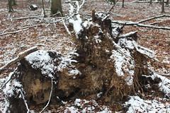 IMG_2043 (ihambi) Tags: hambi hambacherforst hambach hambacher kohleprotest earthfirst kohle occupation forestoccupation forest co2 coal climatechange climatecamp climate braunkohle breakfree solidarity