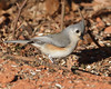 IMG_8948 (DavidMC92) Tags: mitch park edmond oklahoma canon eos 7d tamron sp 70300mm morning wildlife tufted titmouse