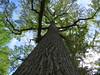Clove Lakes Park #9 (Keith Michael NYC (4 Million+ Views)) Tags: clovelakespark statenisland tuliptree newyorkcity newyork ny nyc