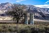 Owens Valley-133 (Denise Noelle Photography) Tags: owensriver bishopca sierranevadamountains monolake lonepine junelake mammothlakes