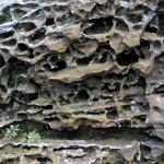 Honeycomb weathering (Black Hand Sandstone, Lower Mississippian; Picnic Rock, Black Hand Gorge, Ohio, USA) 3 thumbnail