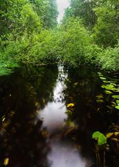 IMG_4638-1 (Andre56154) Tags: schweden sweden sverige bach wasser water wald forest stream