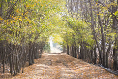 Autumn's colors (Marwanhaddad) Tags: autumn nature trees landscape