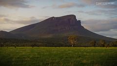 Mt Abrupt Kangaroos (cameron_sweeney) Tags: 50mm au aus australia australian gpt gariwerd grampiansnationalpark grampianspeaktrail kfconcept landscape minolta minoltamcrokkorpgf1450mm photography sony sonya7r thegrampians vic victoria a7r f14 wwwcameronsweeneycomau