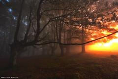 The Awakening of the Forest (Hector Prada) Tags: bosque niebla amanecer árbol bruma hojas contraluz otoño mágico forest fog mist sunrise tree leaves backlight autumn magic enchanted creepy fall paísvasco basquecountry