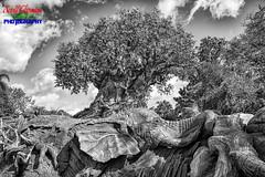 Elephant Tree (Scottwdw) Tags: animal blue carvings clouds disneysanimalkingdom florida intensifyck macphun orlando sky travel treeoflife vacation waltdisneyworld unitedstatesofamerica silverefexpro2 nik blackandwhite nikon d750 afsnikkor28300mmf3556gedvr landscape elephant
