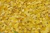 Hojas y frutos del ginkgo (Micheo) Tags: granada spain ginkgo amarillo yellow jaune arboles otoño autumn fall brillo magia encanto luz light alegria