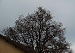 14 - Par-delà... (melina1965) Tags: 2017 décembre december bourgogne burgondy nikon coolpix s3700 saintvallier campagne opencountry hiver winter ciel sky nuage nuages cloud clouds arbre arbres tree trees