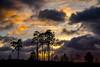 Sunset Pt 2 (Foto_Art_) Tags: colour cloud light sunset nikon 2485mm d610 pine