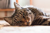 A fine feline (eeva654) Tags: cat cute animal indoors eyes sleepy feline kitty