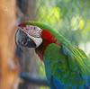 Macaw (DGS Photography) Tags: missouri branson promisedlandzoo bird macaw zoo colorful greatphotographers