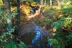 Stawy w Zatorze.  Odpływ 81 (Hejma (+/- 5400 faves and 1,7 milion views)) Tags: zator stawy kanał odpływ drzewa krzewy woda niebieska liście