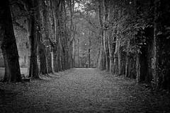 go for a walk (freiraum7) Tags: sony a7ii i fe 28mm f2 sel28f20