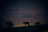 night (Jen MacNeill) Tags: horse horses equine pony animal night hill silhouette rider littledoglaughednoiret