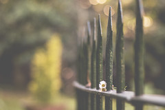 escondidas... (xelea) Tags: 7dwf fences vallas