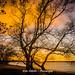 golden november evening (bodoedthofer) Tags: sunset nature sonnenuntergang himmel baum park badplats vomb colours evening sweden sverige schweden skåne landscape landschaft beautiful abend
