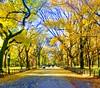 Literary Walk & Mall Central Park (dannydalypix) Tags: autumninnewyork newyorkcity centralpark literarywalkandmallcentralpark themallcentralpark literarywalk