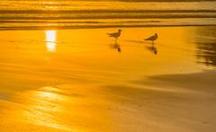 Sunrise Seascape Light Play (Merrillie) Tags: daybreak uminabeach landscape nature australia mountains nswcentralcoast newsouthwales clouds nsw uminapoint beach scenery centralcoastnsw coastal waterscape centralcoast seascape sunrise coast water sea orange