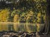 Roundabout (keith_shuley) Tags: rowing shell scull cypress fall fallcolors lake roots austin texas texashillcountry