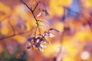Hot fall's jewels
