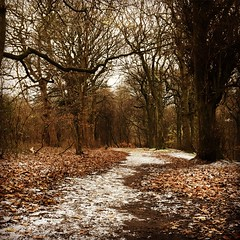 Bierley Woods (Quackers24) Tags: snow winter outdoors