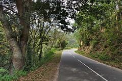 India - Kerala - Munnar - Road To Tea Plantagen - 229 (asienman) Tags: india kerala munnar road asienmanphotography