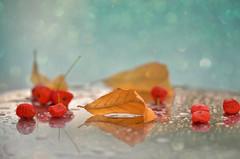 New Day (Zara Calista) Tags: nikon autumn leaf leaves fall yellow berries bokeh dream red dof november pomegranate