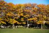 2017-11-10 K1 Boston (17) (Paul-W) Tags: eastboston pierspark boston massachusetts unitedstates us