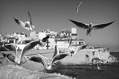 wings of the wind (bostankorkulugu) Tags: seagull seagulls bird birds wings flying sea mediterranean antibes france nice cotedazur promenadeamiraldegrasse