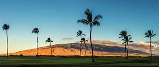 Silhouette of Palm trees on Maui