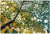 Giao mùa   A change of season (Dino Ngo   +84-936366238) Tags: hanoi littlehanoi film nikon fm2 nikonfm2 fuji fujifilm fuji100 street streetphoto change season winter fall autumn leaves flowers sunflowers dino ngo dinongo