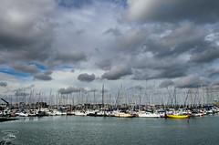 Gita a Howth (Dublino) - 065 (giannizigante) Tags: dublino howth irlanda porto gabbiani seagull pesca pescatori pesce