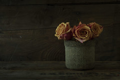 Golden Slumbers (jm atkinson) Tags: roses goldenslumberabbyroad lowkey d700 texturetuesday joanmatkinson oncetherewasaway 60mm ttt