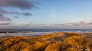 Dunes, North Sea with Winter light