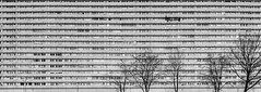 pattren - take 3 /cells for rent/ (ignacy50.pl) Tags: architecture artphotography minimal minimalart pattern trees blackandwhite building apartments people citylife cityscape urban urbanexploration phonephotography