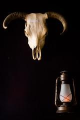 Bull (Thomas Hawk) Tags: america clarkcounty gilleys gilleyslasvegas lasvegas lasvegasstrip nevada sincity ti treasureislandhotelandcasino treausreisland treausreislandlasvegas usa unitedstates unitedstatesofamerica vegas bar bull fav10 fav25