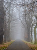 An alley lined with trees during November fog (patuffel) Tags: grafenberger wald forest kastanienallee kastanien allee alley avenue düsseldorf