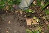 IMG_9354 (armadil) Tags: jennyatrest gecko leopardgecko