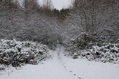 Step in Winter (JP Photography74) Tags: winter snow cold woodland walking uk england staffs nature outdoors trees canon sigma