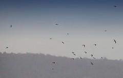 #sky #birds (apploadr) Tags: oiseaux birds volaterias ciel sky cielo fly vol птицы полет небо