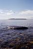 untitled (amanda aura) Tags: film helsinki finland olympusmjuii ocean nature landscape