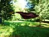 Schwerelos (Tabea-Jane) Tags: laub bäume natur grün braun leaf trees nature green brown