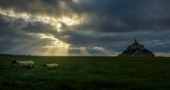 La luz de Dios / GOD´s light (el_farero) Tags: sunset mont saint michel france light farero canon sheep clouds sun castle normandie island filters