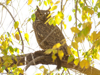 The  owl and  the squirrel