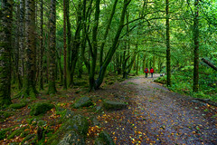 A Walk in the Park (APGougePhotography) Tags: forest green people red path ireland fall killarney national park kerry nikon torc waterfall d800 nikond800 adobe adobelightroom
