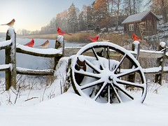 CARDINALS ON A SNOW COVERED  FENCE (CLARENCE STEWART) Tags: cardinals snow fence wagon wheel ice lake house