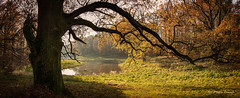 Wąsowo Park (Magda Banach) Tags: canon autumn greaterpoland lake nature plants poland tree trees park wąsowo field landscape save earth flickrsbest 80d