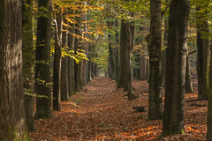 Herfst - Utrechtse heuvelrug (Jan de Neijs Photography) Tags: boom utrechtseheuvelrug utrecht holland nederland thenetherlands heuvelrug herfst forest bos landschap landshaft landscape tree trees hout bomen holz wood wald herfstkleuren autumn colors color blad bladeren nature natuur bospad